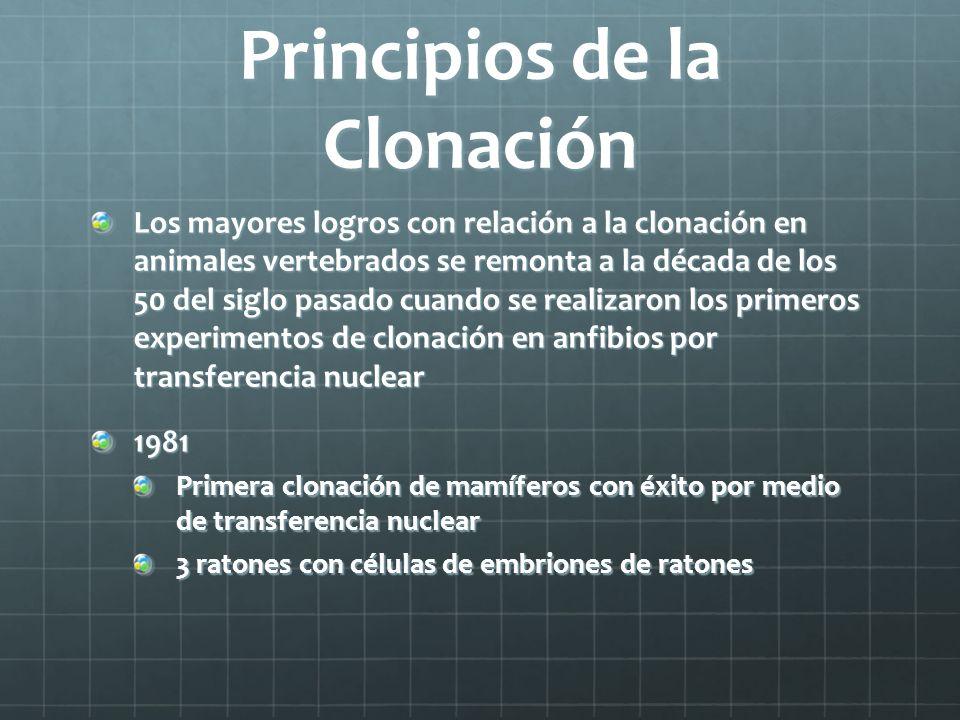 Principios de la Clonación Los mayores logros con relación a la clonación en animales vertebrados se remonta a la década de los 50 del siglo pasado cu