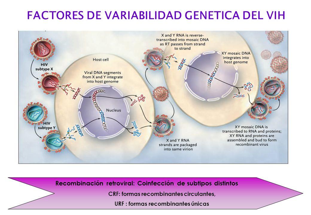 Recombinación retroviral: Coinfección de subtipos distintos CRF: formas recombinantes circulantes, URF : formas recombinantes únicas FACTORES DE VARIA