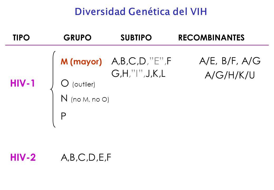TIPOGRUPO SUBTIPO RECOMBINANTES M (mayor) A,B,C,D,E,F G,H,I,J,K,L HIV-1 O (outlier) N (no M, no O) P HIV-2 A,B,C,D,E,F Diversidad Genética del VIH A/E