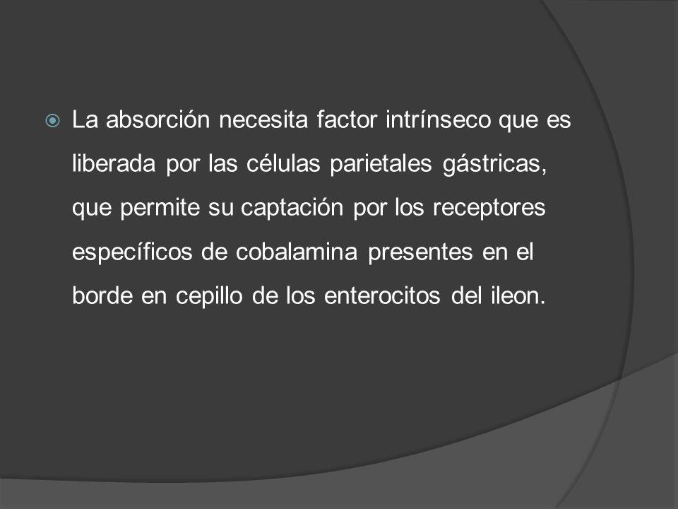 La absorción necesita factor intrínseco que es liberada por las células parietales gástricas, que permite su captación por los receptores específicos