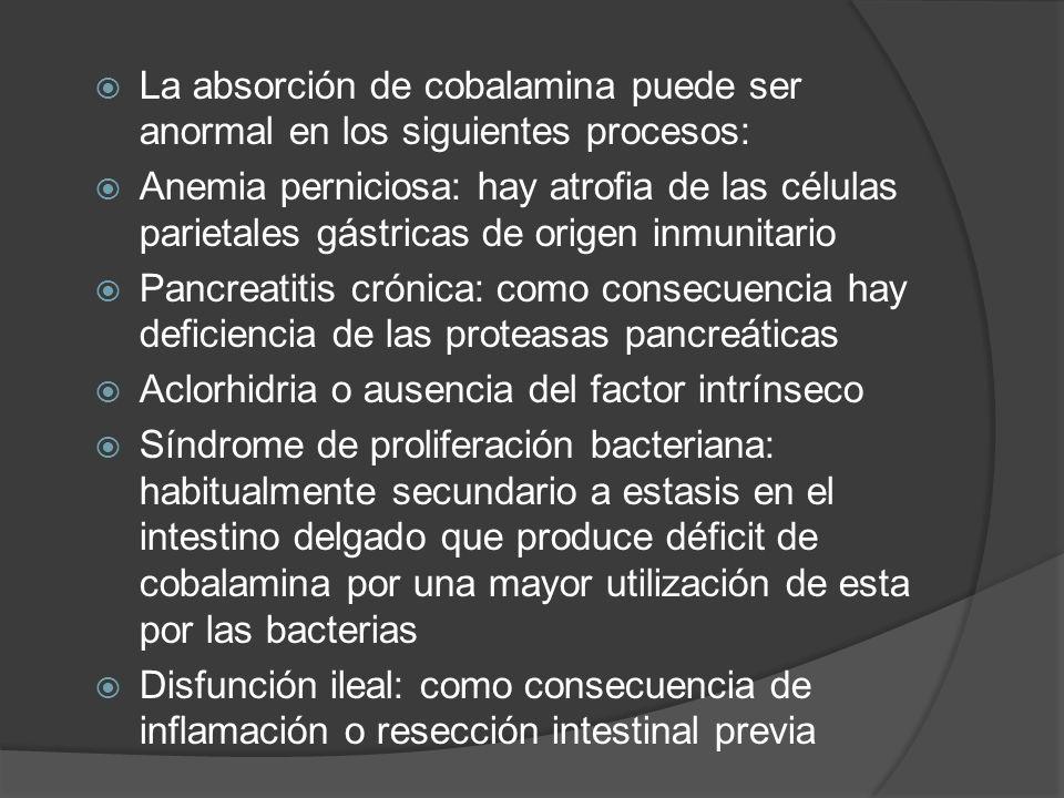 La absorción de cobalamina puede ser anormal en los siguientes procesos: Anemia perniciosa: hay atrofia de las células parietales gástricas de origen