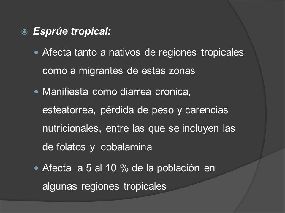 Esprúe tropical: Afecta tanto a nativos de regiones tropicales como a migrantes de estas zonas Manifiesta como diarrea crónica, esteatorrea, pérdida d