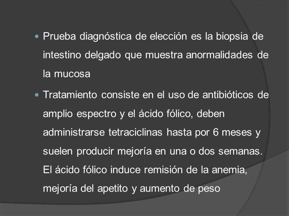 Prueba diagnóstica de elección es la biopsia de intestino delgado que muestra anormalidades de la mucosa Tratamiento consiste en el uso de antibiótico