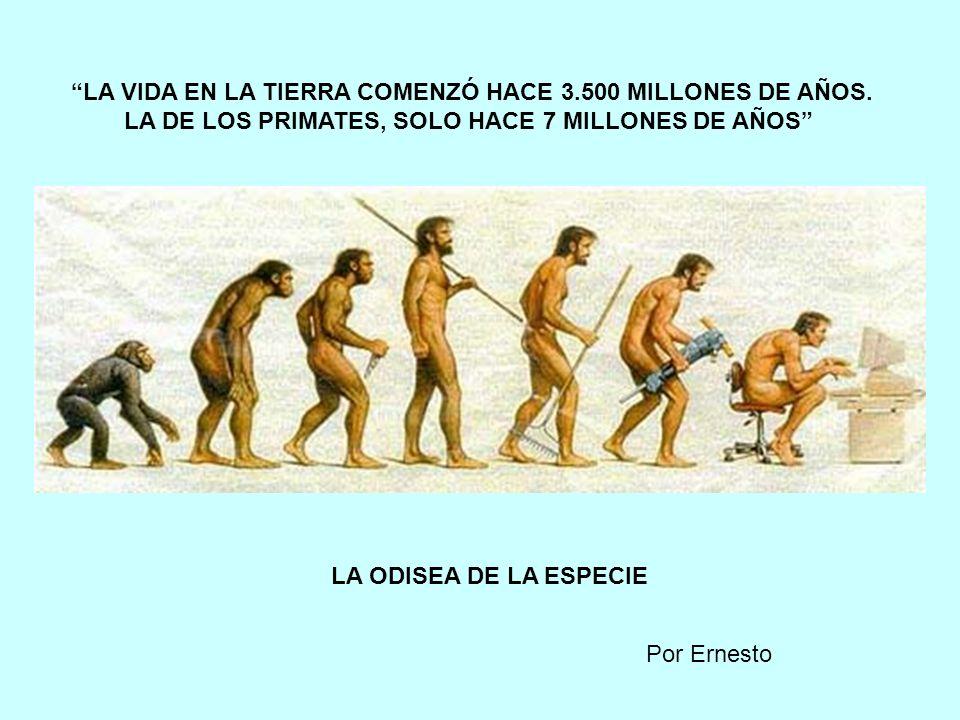 NEANDERTHAL CROMAGNON Sapiens sapiens