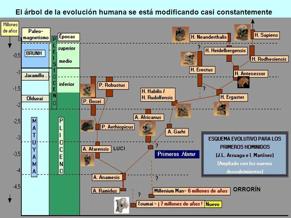 El árbol de la evolución humana se está modificando casi constantemente ORRORÍN LUCI