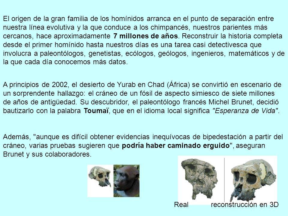 El origen de la gran familia de los homínidos arranca en el punto de separación entre nuestra línea evolutiva y la que conduce a los chimpancés, nuest