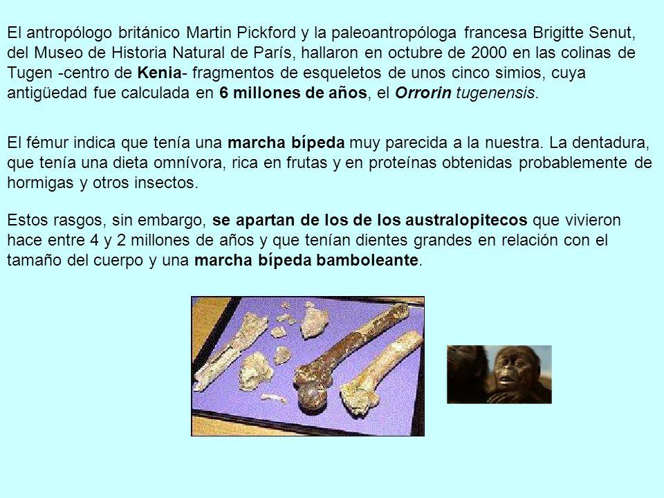 El antropólogo británico Martin Pickford y la paleoantropóloga francesa Brigitte Senut, del Museo de Historia Natural de París, hallaron en octubre de