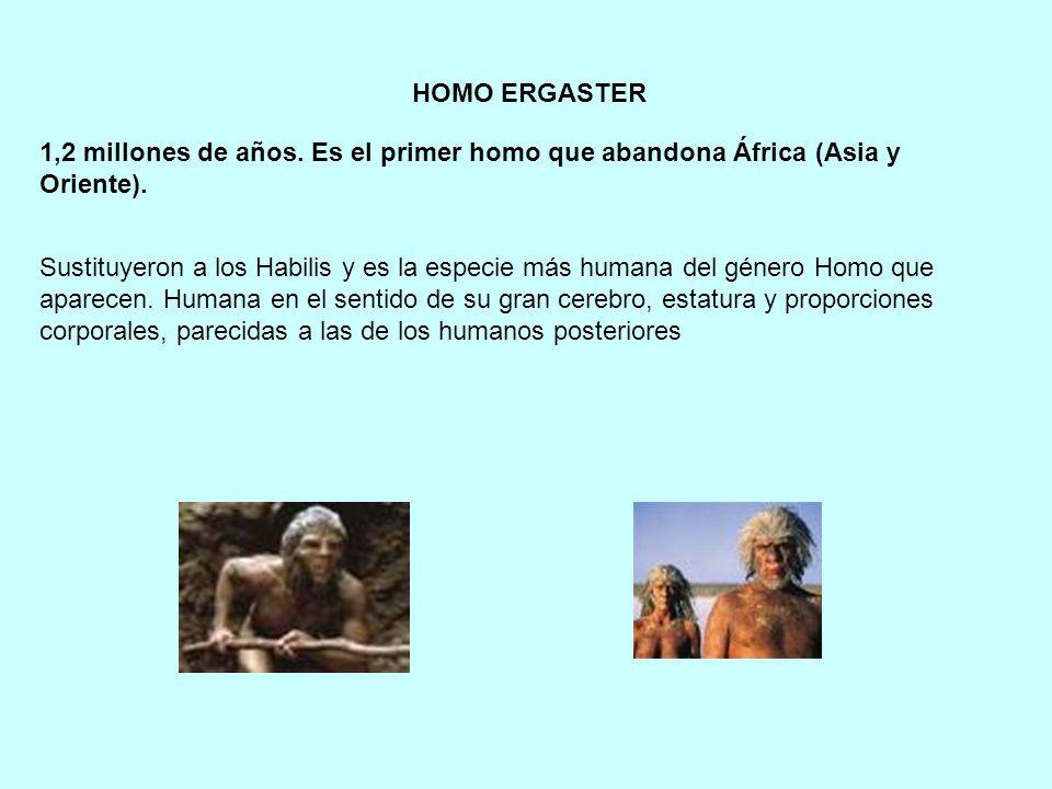 1,2 millones de años. Es el primer homo que abandona África (Asia y Oriente). HOMO ERGASTER Sustituyeron a los Habilis y es la especie más humana del