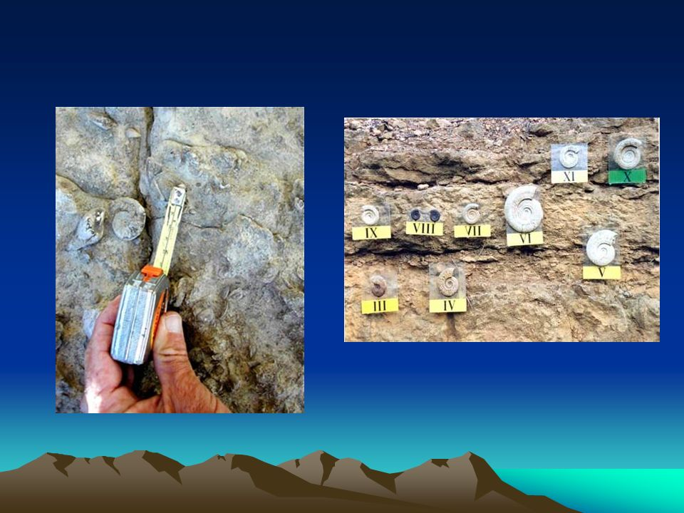 LITOESTRATIGRAFIA Su objetivo es describir las unidades geológicas, dándoles un origen lo más concreto posible.