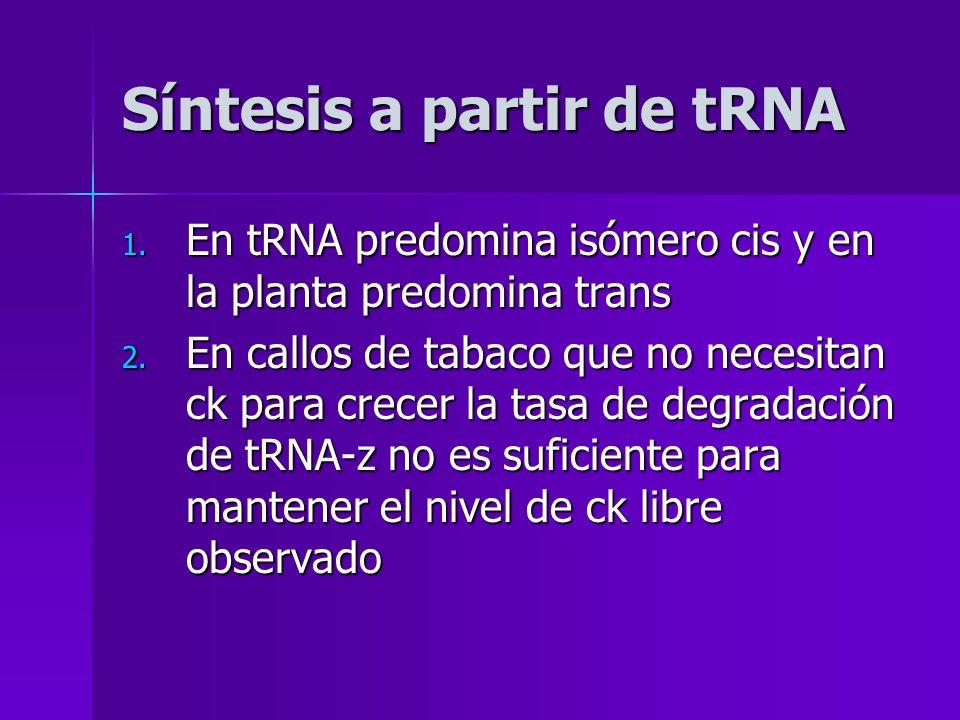 Síntesis a partir de tRNA 1. En tRNA predomina isómero cis y en la planta predomina trans 2. En callos de tabaco que no necesitan ck para crecer la ta