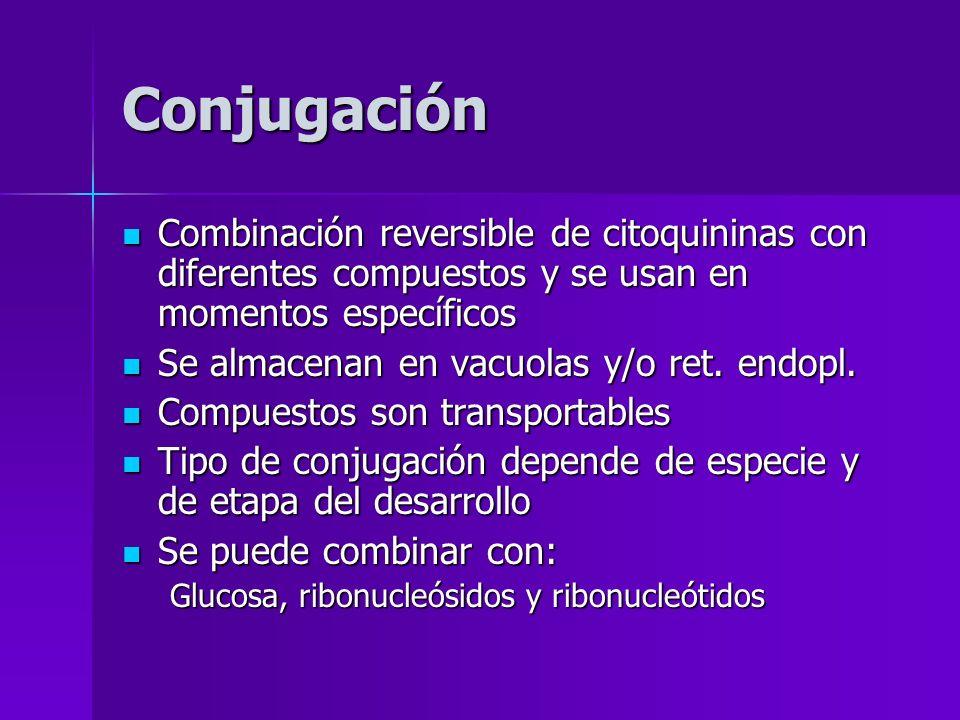 Conjugación Combinación reversible de citoquininas con diferentes compuestos y se usan en momentos específicos Combinación reversible de citoquininas