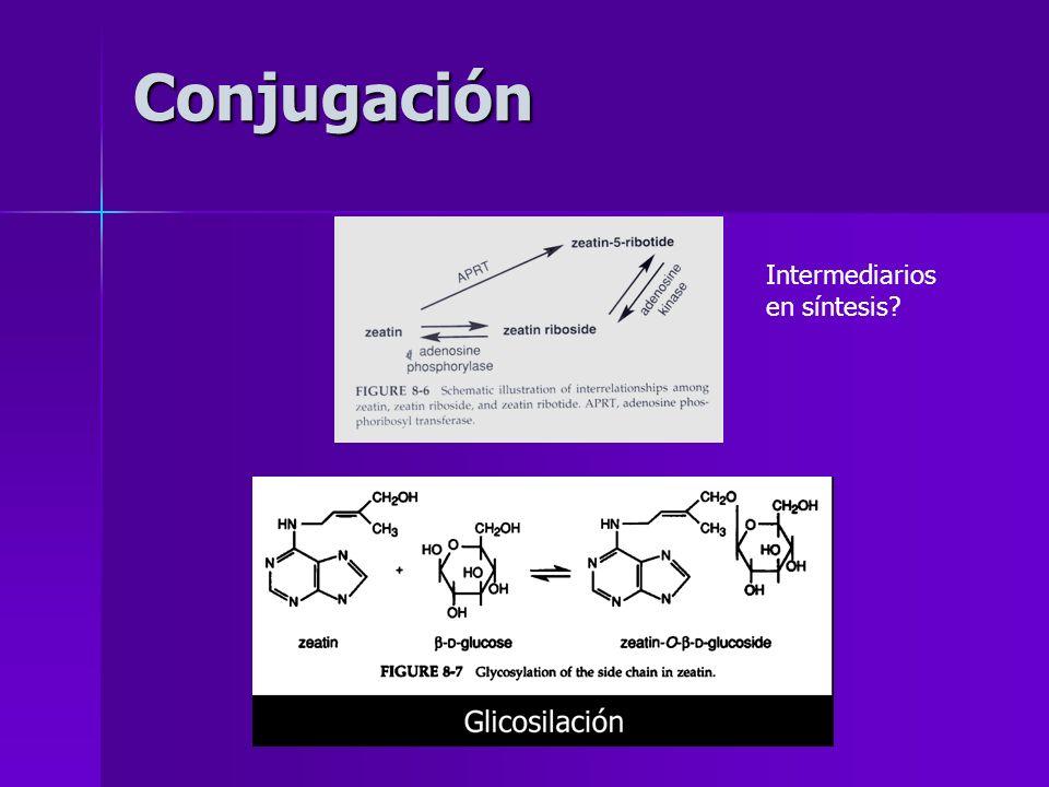 Conjugación Intermediarios en síntesis?