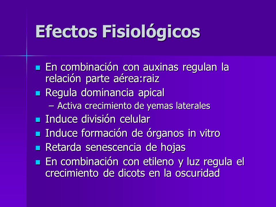 Efectos Fisiológicos En combinación con auxinas regulan la relación parte aérea:raiz En combinación con auxinas regulan la relación parte aérea:raiz R