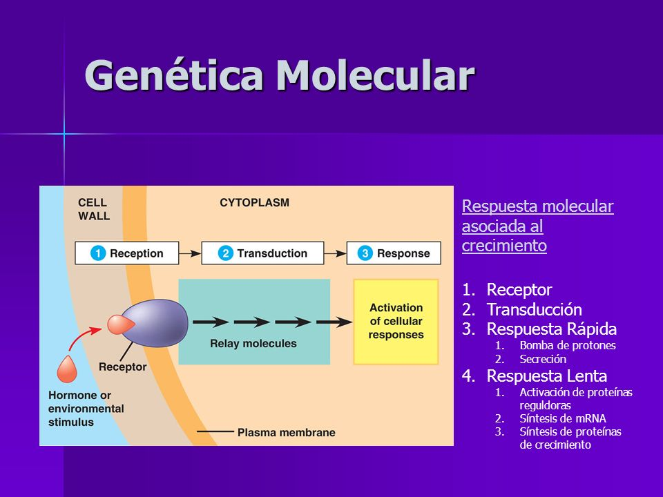 Genética Molecular Respuesta molecular asociada al crecimiento 1.Receptor 2.Transducción 3.Respuesta Rápida 1.Bomba de protones 2.Secreción 4.Respuest