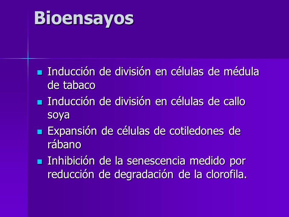 Bioensayos Inducción de división en células de médula de tabaco Inducción de división en células de médula de tabaco Inducción de división en células