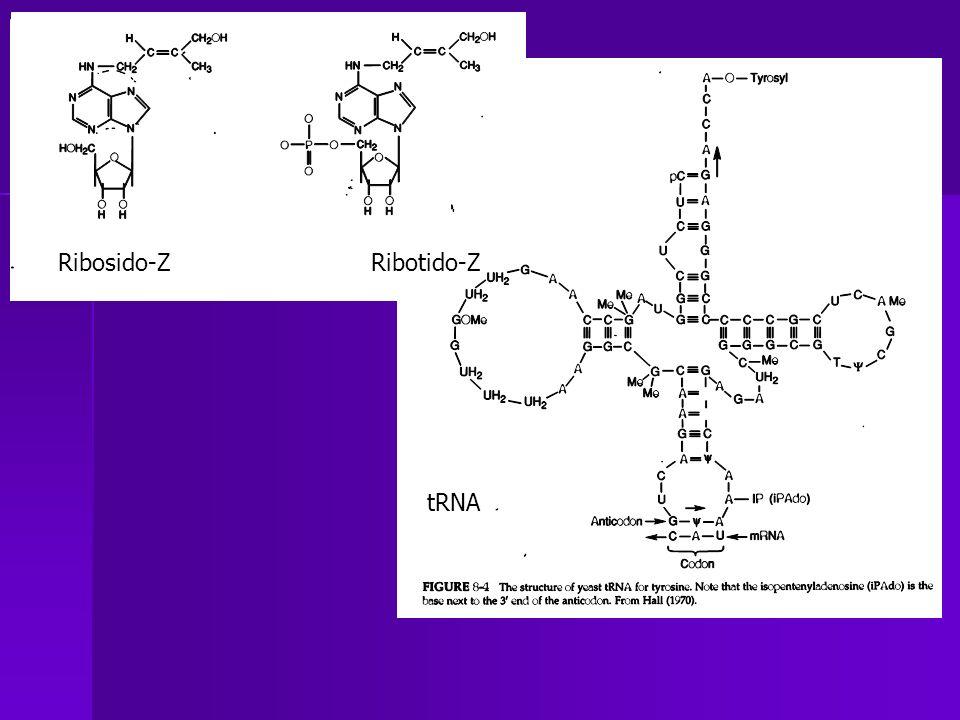 Ribosido-Z Ribotido-Z tRNA