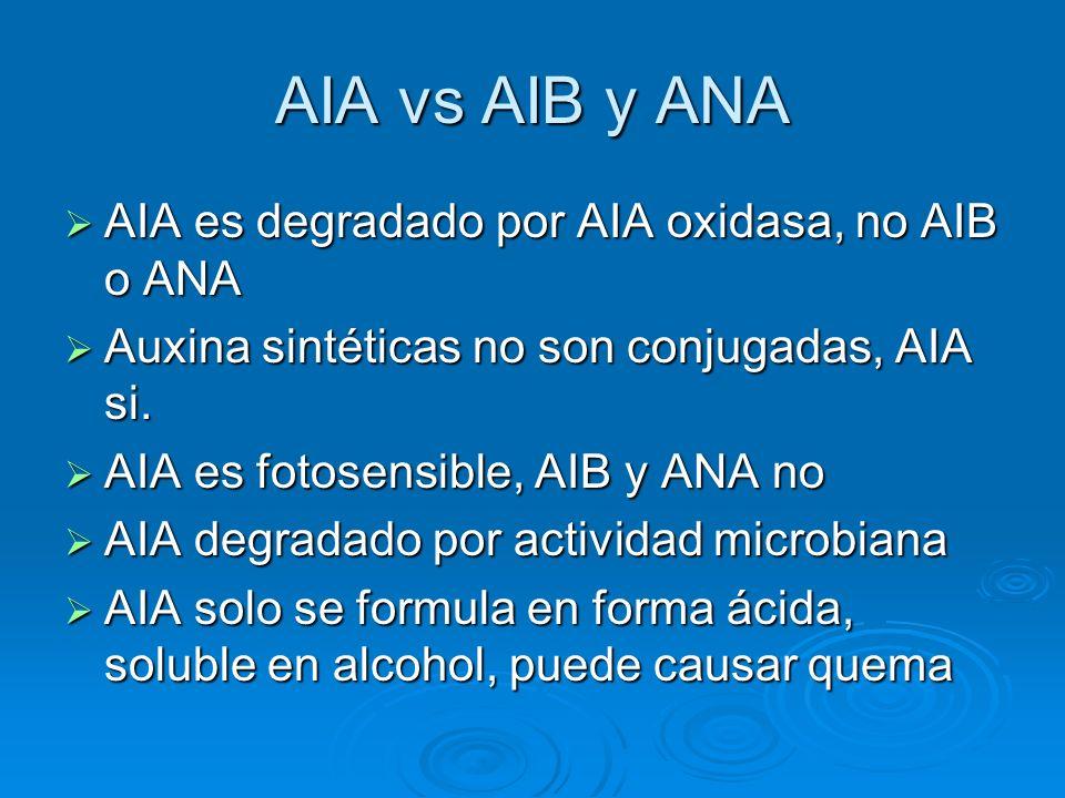 AIA vs AIB y ANA AIA es degradado por AIA oxidasa, no AIB o ANA AIA es degradado por AIA oxidasa, no AIB o ANA Auxina sintéticas no son conjugadas, AI