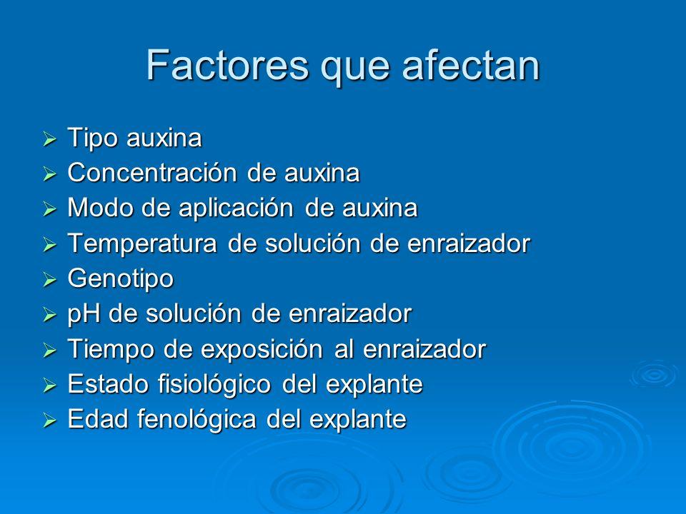 Factores que afectan Tipo auxina Tipo auxina Concentración de auxina Concentración de auxina Modo de aplicación de auxina Modo de aplicación de auxina
