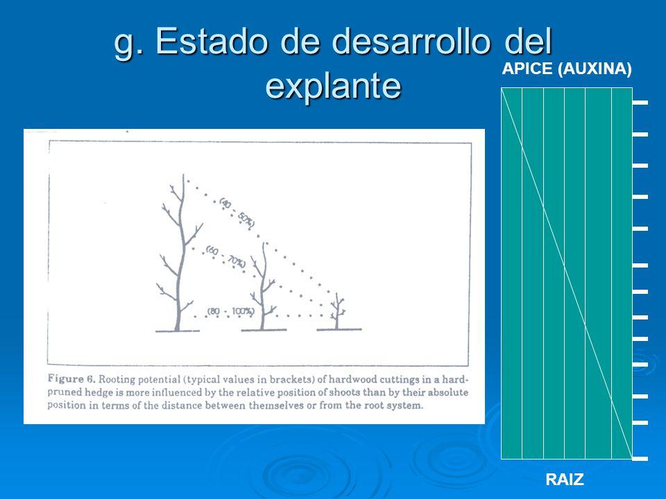 g. Estado de desarrollo del explante APICE (AUXINA) RAIZ