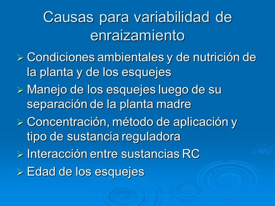 Causas para variabilidad de enraizamiento Condiciones ambientales y de nutrición de la planta y de los esquejes Condiciones ambientales y de nutrición