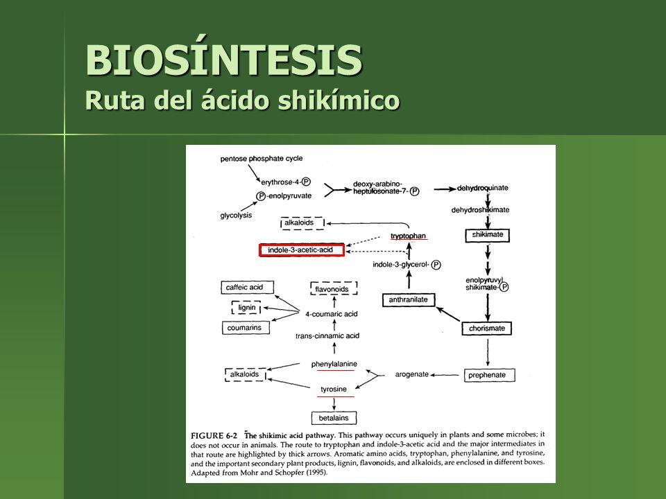 BIOSÍNTESIS Ruta del ácido shikímico