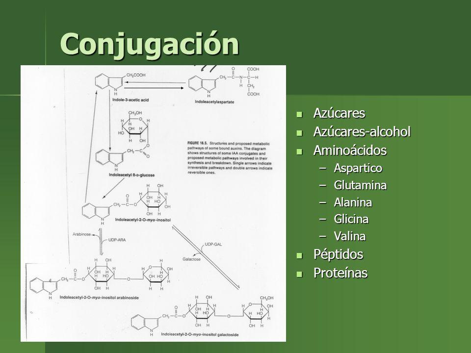 Azúcares Azúcares Azúcares-alcohol Azúcares-alcohol Aminoácidos Aminoácidos –Aspartico –Glutamina –Alanina –Glicina –Valina Péptidos Péptidos Proteína