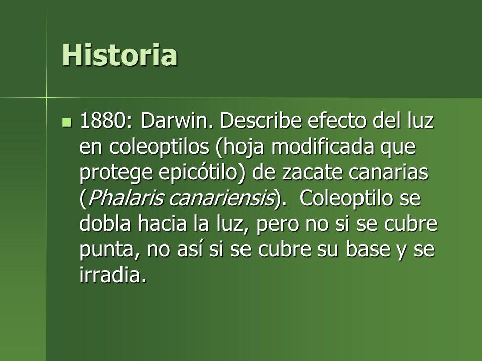 Historia 1880: Darwin. Describe efecto del luz en coleoptilos (hoja modificada que protege epicótilo) de zacate canarias (Phalaris canariensis). Coleo