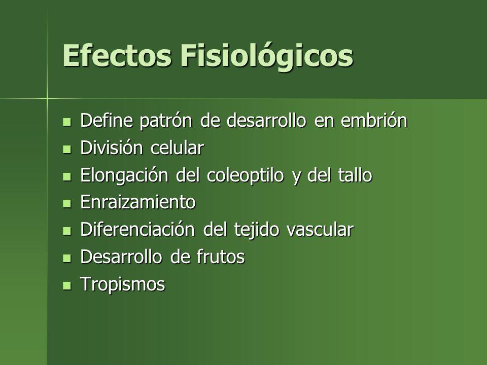 Efectos Fisiológicos Define patrón de desarrollo en embrión Define patrón de desarrollo en embrión División celular División celular Elongación del co