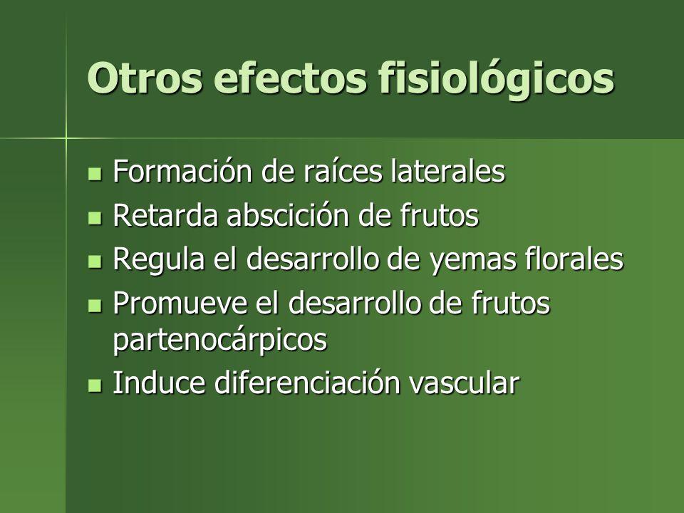 Otros efectos fisiológicos Formación de raíces laterales Formación de raíces laterales Retarda abscición de frutos Retarda abscición de frutos Regula