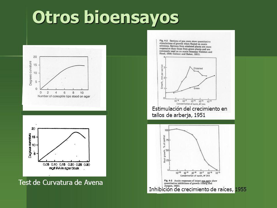 Catabolismo Remoción irreversible de IAA Remoción irreversible de IAA 2 vías principales 2 vías principales –Oxidación de anillo indole (más común) –Decarboxilación de cadena lateral Productos Productos –2 oxindole 3 ácido acético –Indole 3 acetyl ácido aspártico No se conocen los genes asociados a estos procesos.