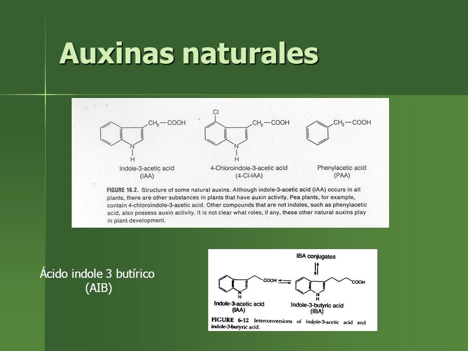 Auxinas naturales Ácido indole 3 butírico (AIB)