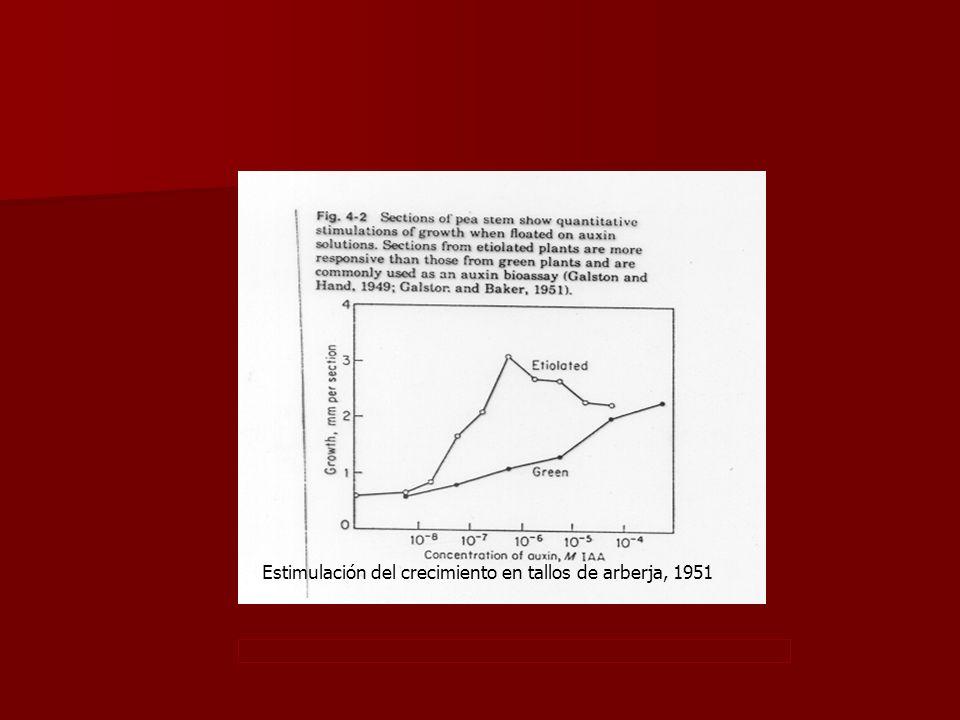Estimulación del crecimiento en tallos de arberja, 1951