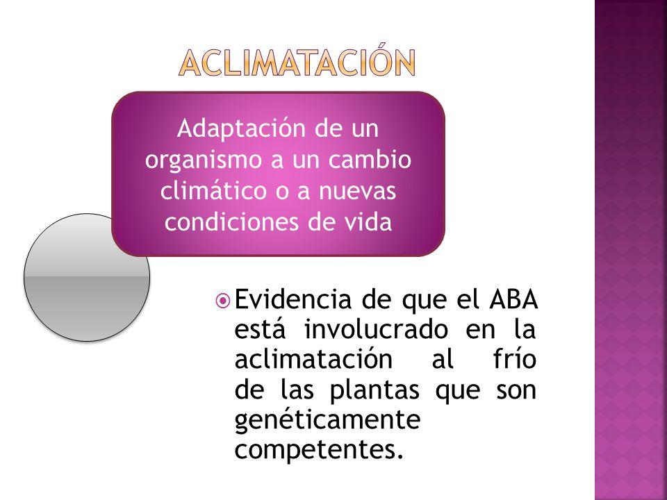 Adaptación de un organismo a un cambio climático o a nuevas condiciones de vida Evidencia de que el ABA está involucrado en la aclimatación al frío de