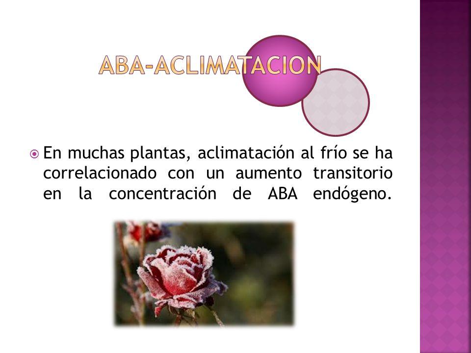En muchas plantas, aclimatación al frío se ha correlacionado con un aumento transitorio en la concentración de ABA endógeno.