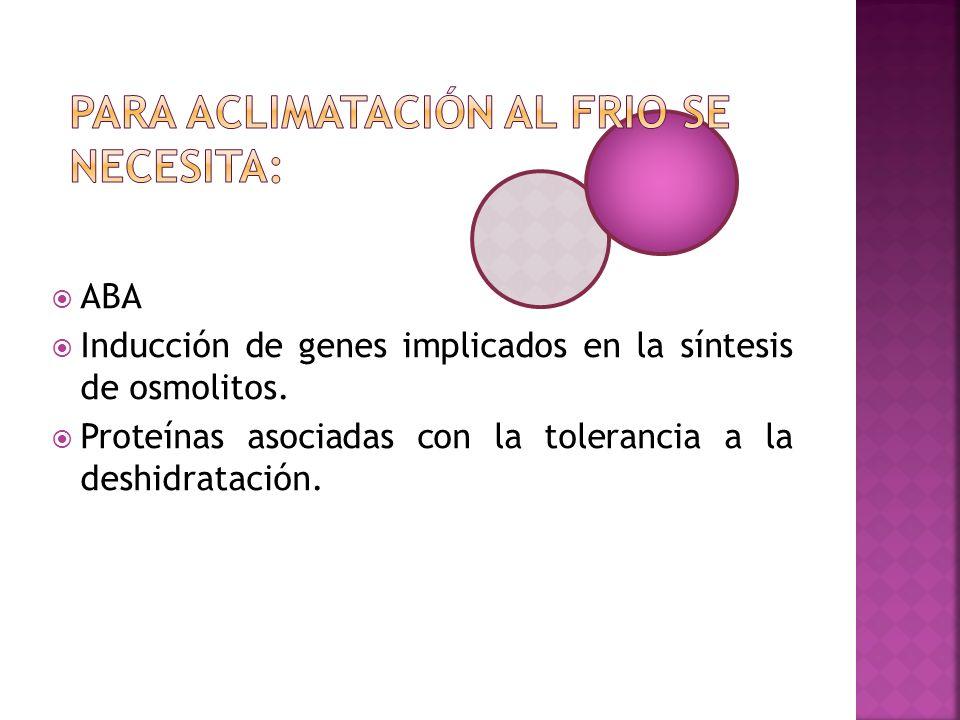 ABA Inducción de genes implicados en la síntesis de osmolitos. Proteínas asociadas con la tolerancia a la deshidratación.
