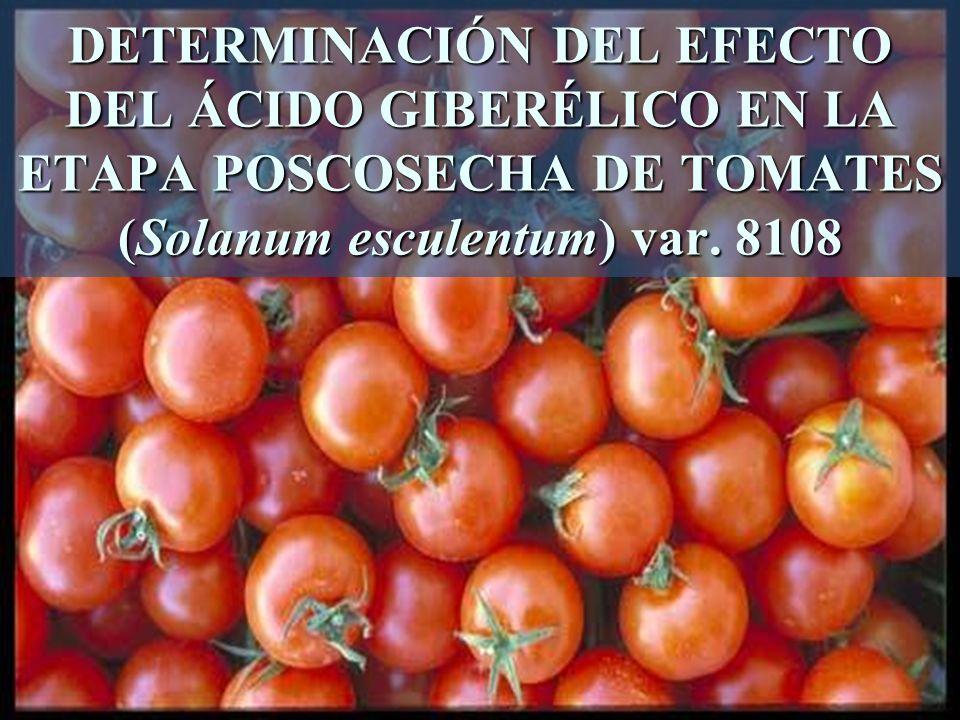 DETERMINACIÓN DEL EFECTO DEL ÁCIDO GIBERÉLICO EN LA ETAPA POSCOSECHA DE TOMATES (Solanum esculentum) var. 8108
