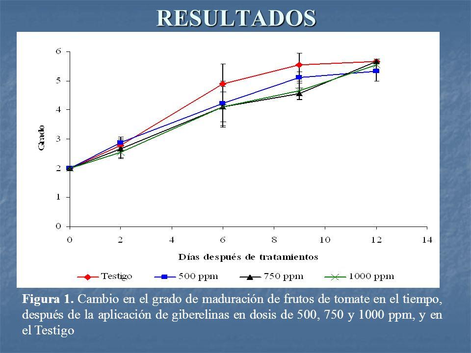 RESULTADOS Figura 1. Cambio en el grado de maduración de frutos de tomate en el tiempo, después de la aplicación de giberelinas en dosis de 500, 750 y