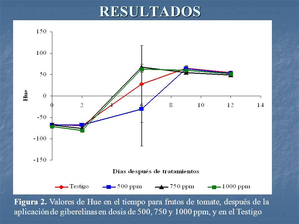 RESULTADOS Figura 2. Valores de Hue en el tiempo para frutos de tomate, después de la aplicación de giberelinas en dosis de 500, 750 y 1000 ppm, y en