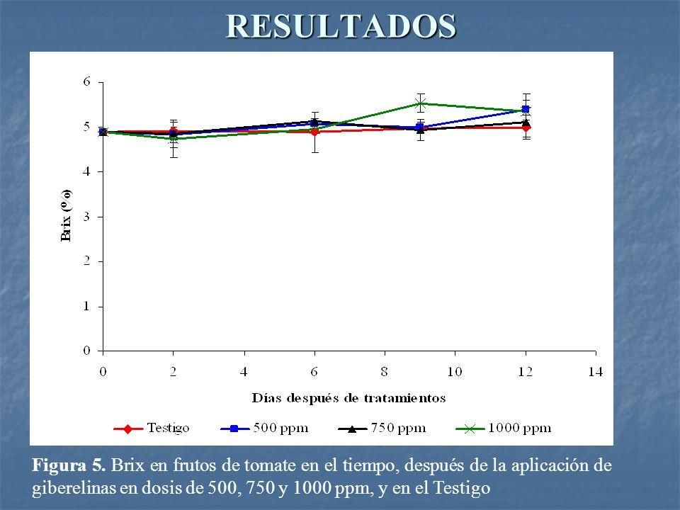 RESULTADOS Figura 5. Brix en frutos de tomate en el tiempo, después de la aplicación de giberelinas en dosis de 500, 750 y 1000 ppm, y en el Testigo
