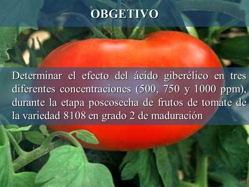OBGETIVO Determinar el efecto del ácido giberélico en tres diferentes concentraciones (500, 750 y 1000 ppm), durante la etapa poscosecha de frutos de