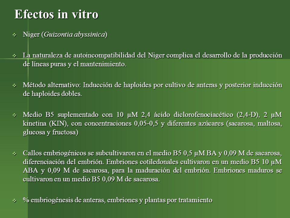 Efectos in vitro Niger (Guizontia abyssinica) Niger (Guizontia abyssinica) La naturaleza de autoincompatibilidad del Niger complica el desarrollo de l