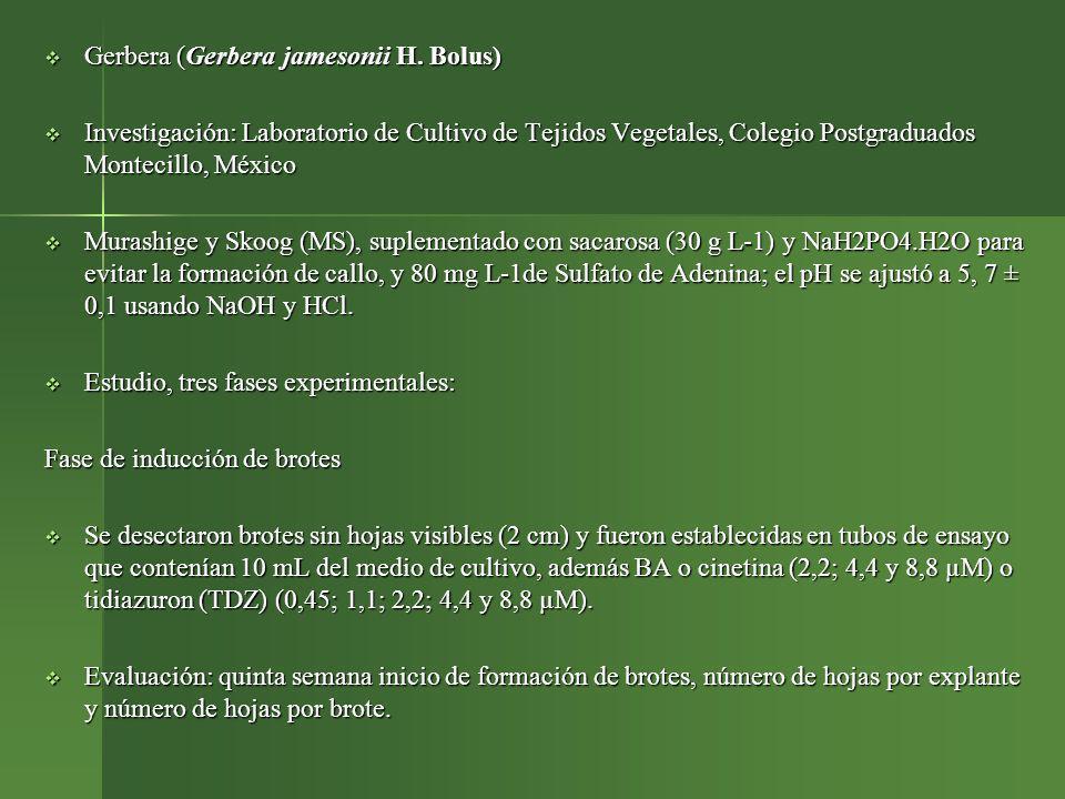 Gerbera (Gerbera jamesonii H. Bolus) Gerbera (Gerbera jamesonii H. Bolus) Investigación: Laboratorio de Cultivo de Tejidos Vegetales, Colegio Postgrad