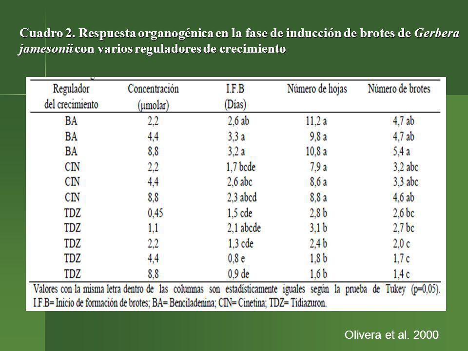 Cuadro 2. Respuesta organogénica en la fase de inducción de brotes de Gerbera jamesonii con varios reguladores de crecimiento Olivera et al. 2000
