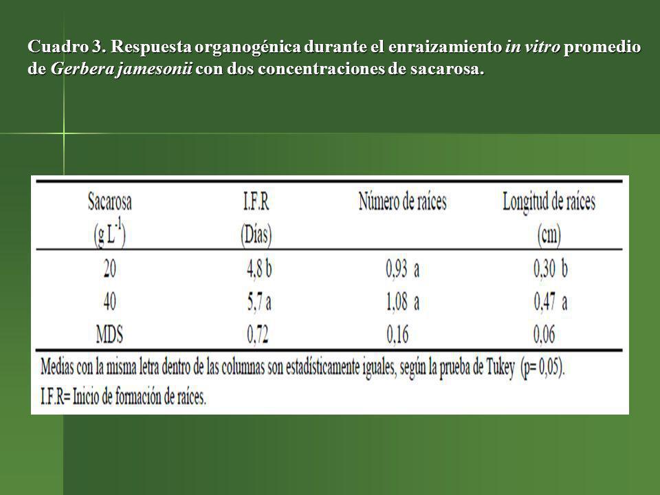 Cuadro 3. Respuesta organogénica durante el enraizamiento in vitro promedio de Gerbera jamesonii con dos concentraciones de sacarosa.
