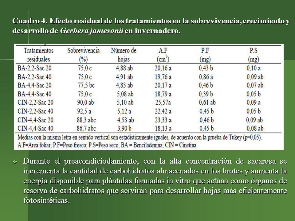 Cuadro 4. Efecto residual de los tratamientos en la sobrevivencia, crecimiento y desarrollo de Gerbera jamesonii en invernadero. Durante el preacondic