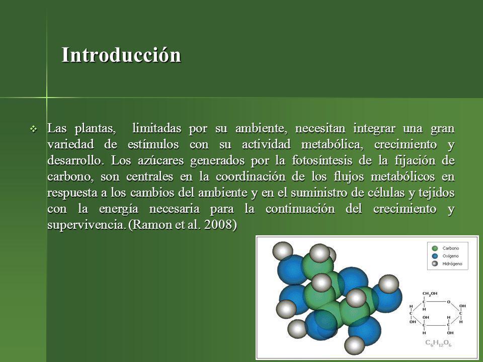 Fase de enraizamiento in vitro Se utilizaron brotes de cinco variedades de Gerbera, 2 cm de longitud con tres hojas como mínimo.