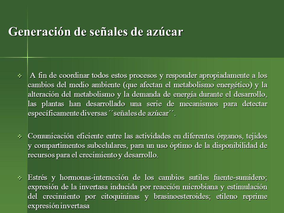 Biosíntesis Ramón et al. 2008