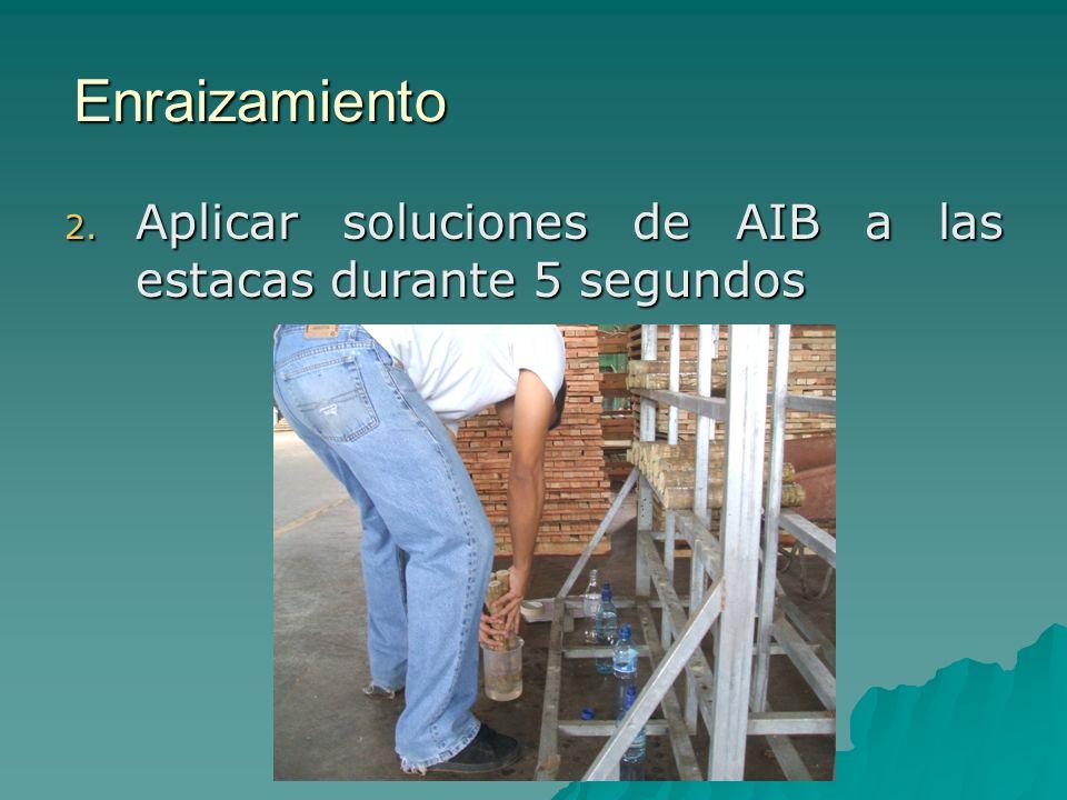 Enraizamiento 2. Aplicar soluciones de AIB a las estacas durante 5 segundos