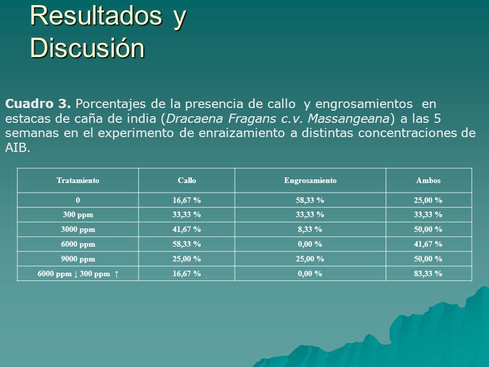 Cuadro 3. Porcentajes de la presencia de callo y engrosamientos en estacas de caña de india (Dracaena Fragans c.v. Massangeana) a las 5 semanas en el