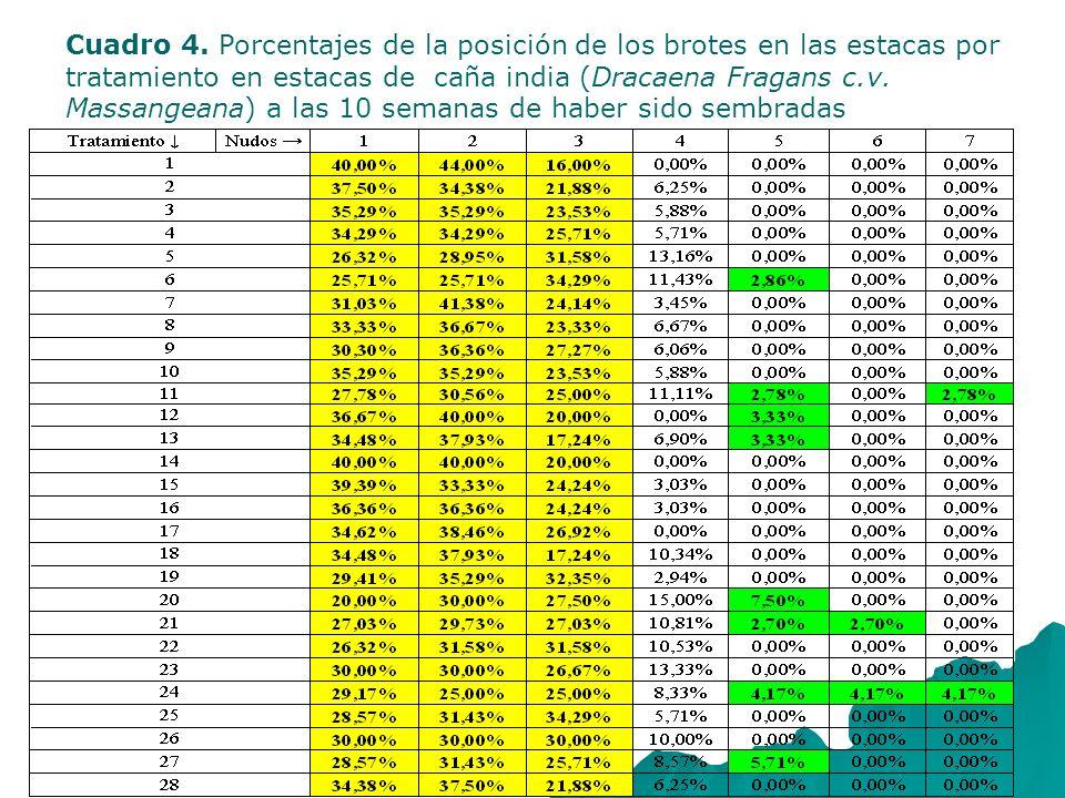 Cuadro 4. Porcentajes de la posición de los brotes en las estacas por tratamiento en estacas de caña india (Dracaena Fragans c.v. Massangeana) a las 1